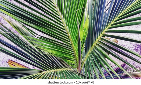 Growing green palm fronds