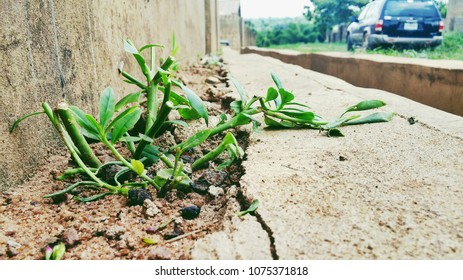 Growing green plants on a concrete floor