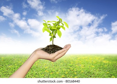 Growing green seedlings in a hand on natural background