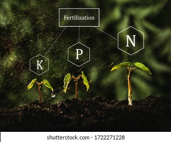 Growing green seedlings and the process of fertilizing with nutrients such as nitrogen, phosphorus and potassium for the healthy growth of plants and their resistance.