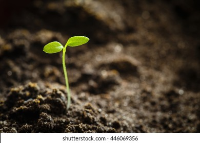 Growing Green Sprout From Soil. Spring Concept Of New Life. Agricultural Season