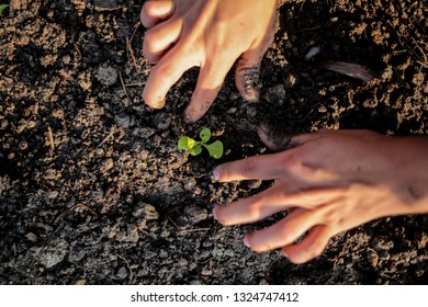 Growing greens and hands