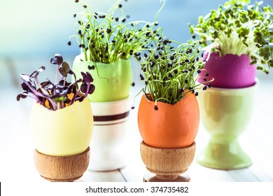 Growing healthy sprouts in Easter egg shell, dieting concept and easter decoration idea.