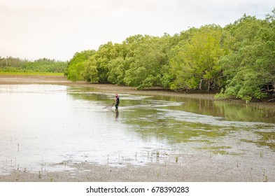 Growing mangrove in Thungprongthong forest, Thailand, Rayong, Prasae