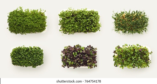 Growing micro greens isolated on white background, copy space, top view. Assortment of baby sprouts in plastic bowls, mockup for healthy eating and organic restaurant cooking advertisement