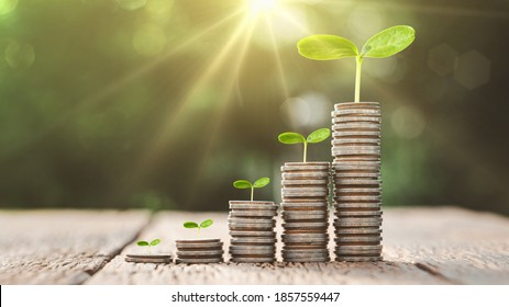 Growing Money, business finance and saving money investment , Money coin stack growing graph, plant growing up on coins. Balance savings and investment. - Shutterstock ID 1857559447