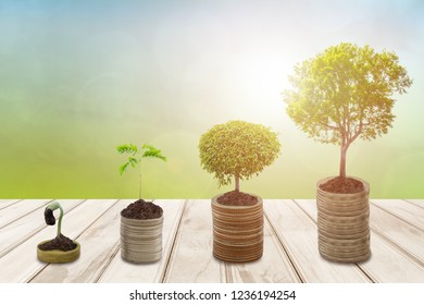 Growing Money or Plant on coins business success ,Trees growing on pile of coins money in sun flare silhouette style, Finance And Investment Concept.