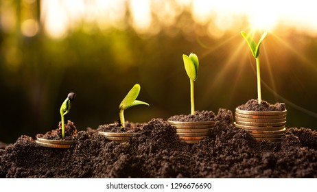 Growing Money  Plant On Coins business Finance And Investment Concept