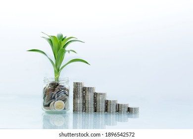 Growing Money - Plant On Coins - Finance And Investment,saving Concept.