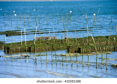 Growing oysters at low tide at the port of Arcachon, France