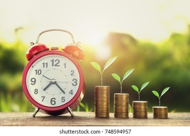 growing plant with money stack and alarm clock on wood sunset background