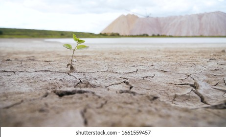 growing plant on dry cracked ground. the effects of the greenhouse effect. destruction of vegetation due to heat. threat of destruction of vegetation of the Earth.