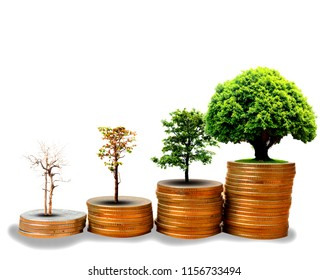 Growing plant on row of coin money for finance and banking concept  isolated on white background with clipping path.