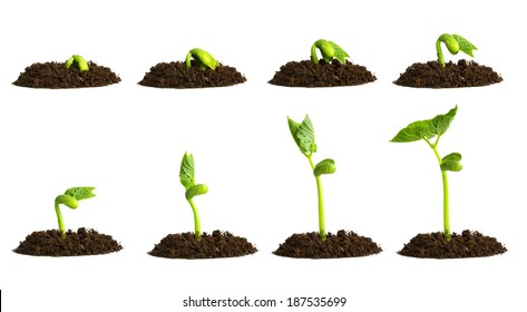 Growing plant in soil isolated on white background.