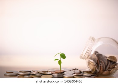 Growing plants on coins stacked in concept of savings and money growing. Business investment growth concept. money saving and Investment. retirement and time passing concept. 401k.