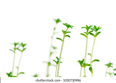 growing plants towards the light