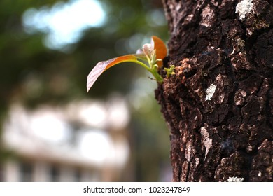 Growing seed in old trunk - environment protection defocus background conceptual macro close up minimalis photography growth change new life garden