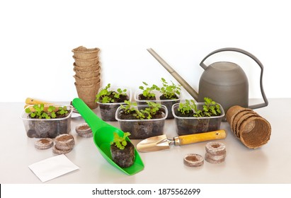 Growing seedlings using peat tablets and peat pots. Rooted strawberry sprouts in soil tablets. Watering can, scoops, seeds, tools on a light table. Spring gardening at home. Floral background