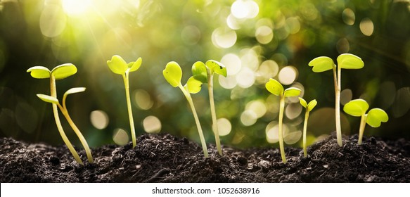 Growing Seeds on Natural Sunny Background. Agriculture. Plant seedling