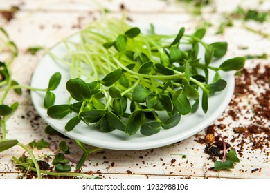 Growing sprouted seeds, microgreens. Healthy lifestyle. Green sprouts in a block of soil.