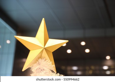 growing star decorating the christmas tree  branch