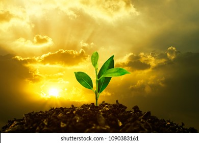 Growing tree on fertile soil at sunset background. Save Earth Planet World Concept. World environment day. Mixed media.