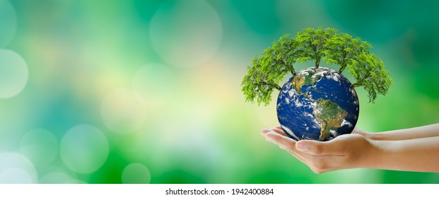 Growing tree on Planet Earth in hand. Green background with bokeh. World mental health and World earth day. Elements furnished by NASA. Saving environment and World Ecology Concept.
