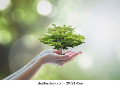 Growing tree to save ecological sustainability, sustainable environment, and corporate social responsibility CSR in nature concept with tree on volunteer's hand