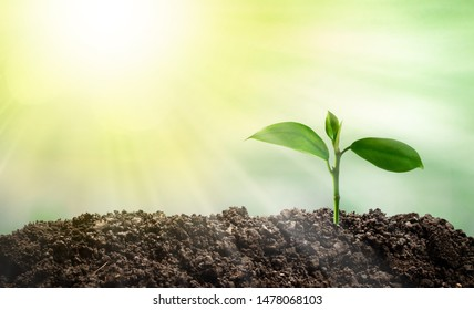 Growing trees that are growing in the morning sun, saving the world and reducing global warming.
