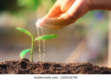 Growing trees, growing young trees, taking care of the environment, preventing global warming