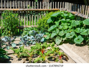 Growing vegetable in a traditional rural kitchen garden
