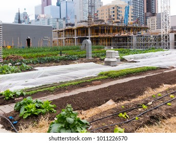 Growing vegetables on roof of urban building