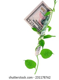 A growing vine wrapped around a fifty- dollar bill.