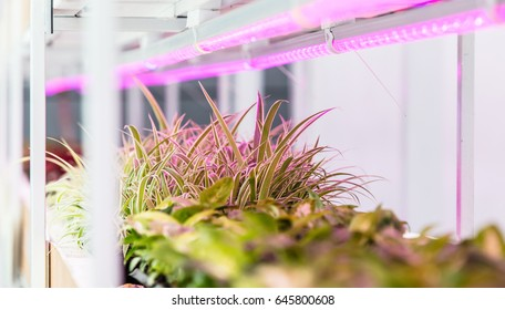 Growing well all kinds of plants and vegetables, using LED light source to complete photosynthesis, agricultural science makes people live a healthier