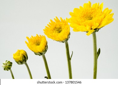 Growing yellow flowers