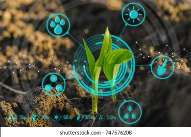 Growing young maize seedling in cultivated agricultural farm field with modern technology concepts