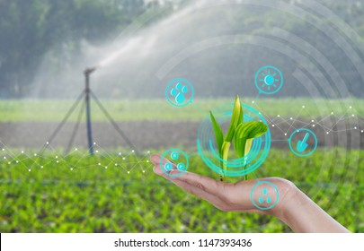 Growing young maize seedling on hand with modern agriculture digital technology concepts