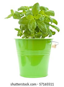 growing young sweet basil plants in green bucket isolated on white