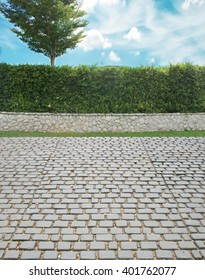 Grown tree with brick wall and ornamental shrub and cobble stone street