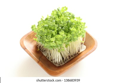 growth of broccoli sprout on white background for healthy food ingredient image