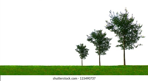 Growth concept with three growing trees of different size. On white background.