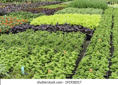 Growth at a glance: Variety of greenhouse plants in spring (foreground focus)