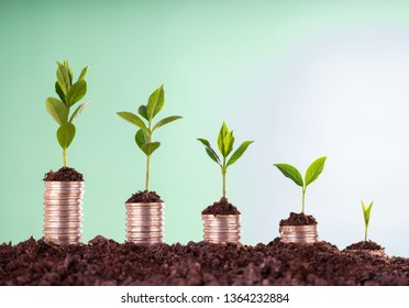 Growth of Money, Plant on Metal Coins, Investment Concept