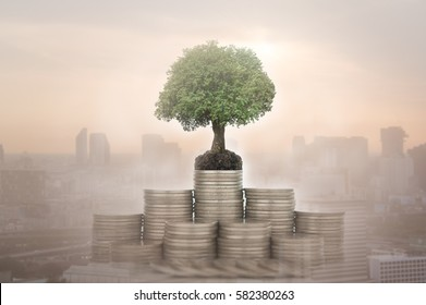growth money and property investment concept. plant growth on stack coin with business city background.