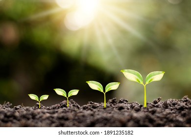 Growth order of young plants, plants or young trees on natural background.