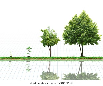 The growth of the plant, tree