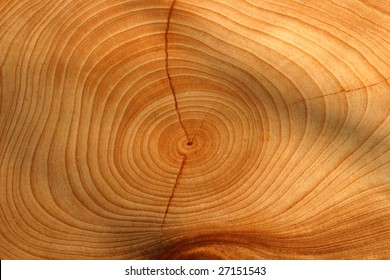 growth ring