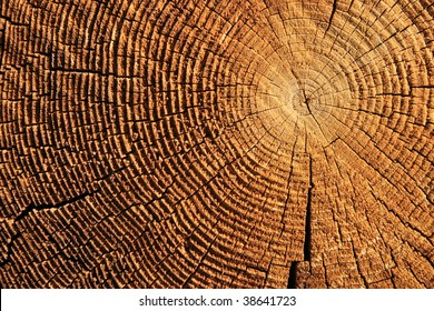 growth rings on the end of a brown sawed log