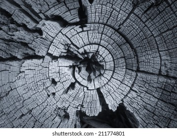 Growth rings on an old trunk