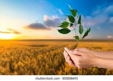 Growth, Tree, Human Hand.